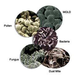Dustmite-Bacteria-Pollen-Mold-Fungus_full